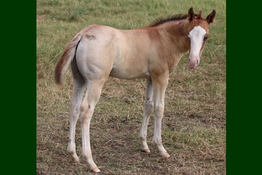 Horses for Sale - Rancho El Fortín